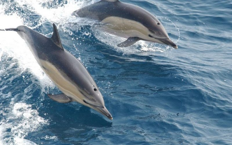 dolphin tours1