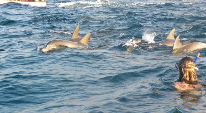 dolphin tours3