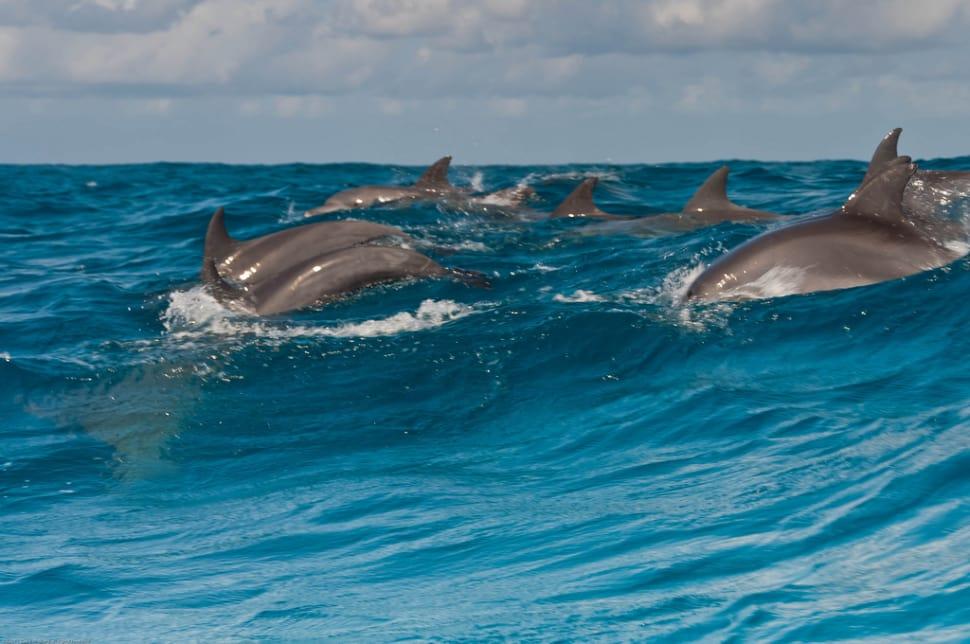 dolphin tours4