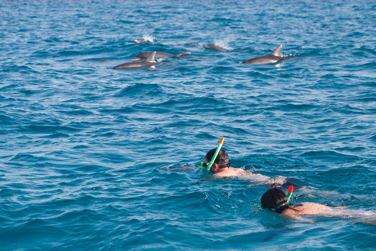 dolphin tours5