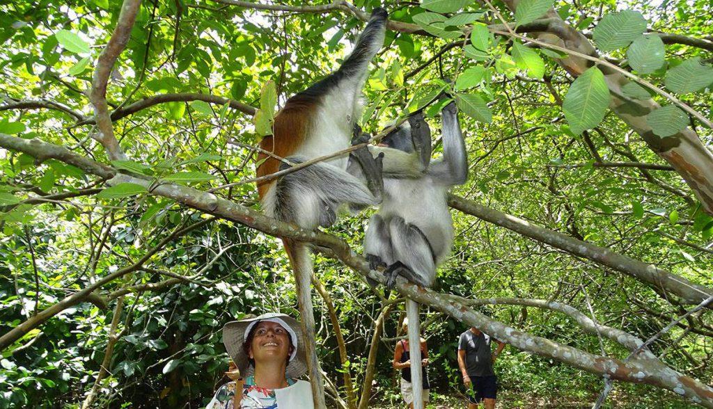 jozani forest tour6